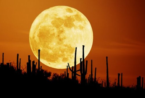 moon in desert