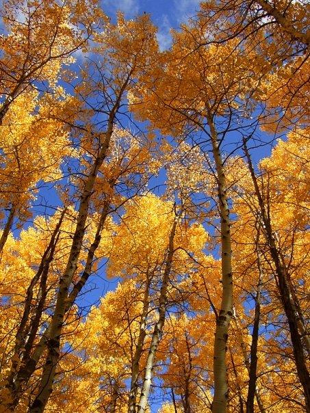 Lake Tahoe Fall
