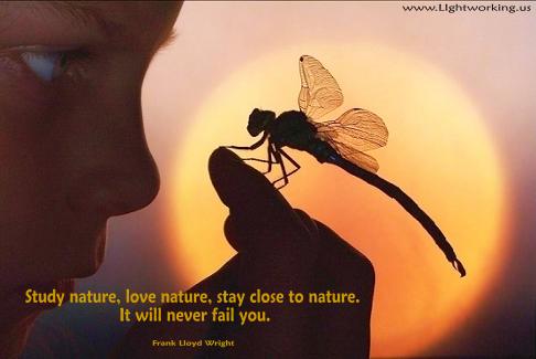 Nature- Joe fr MS